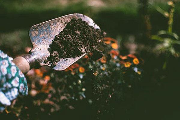 hand holding garden trowel of dirt