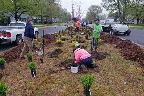 four people adding new plants to a median